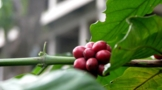 coffee-beans-of-the-farm