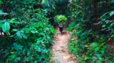hiking-through-the-lush-green-forest-of-bangli