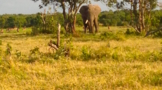 our-farmstay-is-close-to-ol-pejete-conservancy