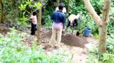 planting-more-trees
